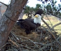 The Harrison Bay Eagle Cam Project